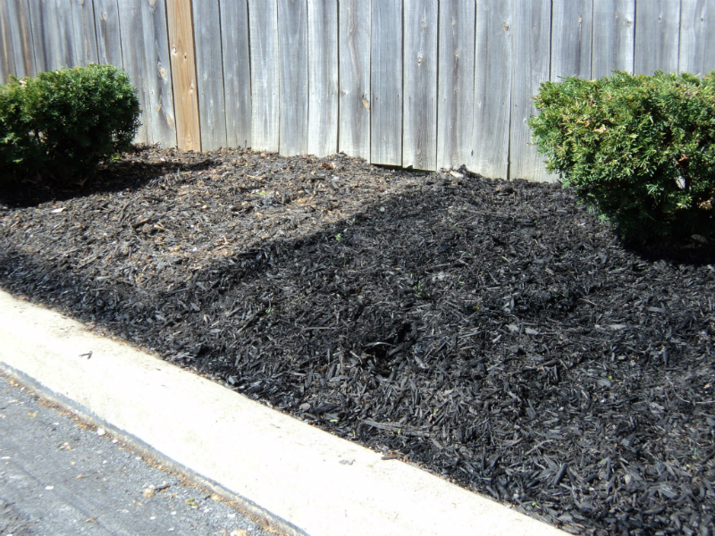 freshen-up-the-mulch-at-half-the-price-with-a-little-mulch-painting